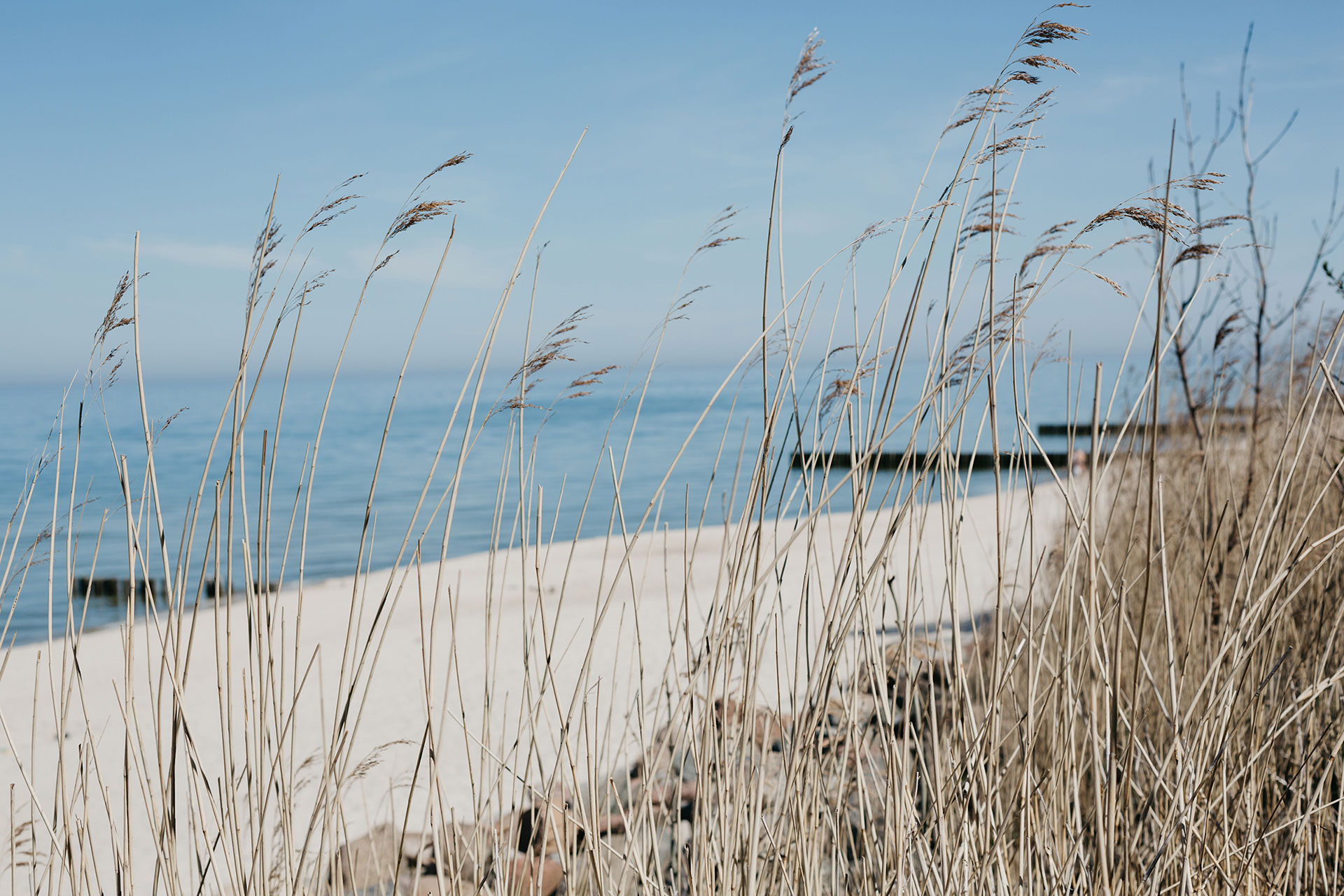 Curonian Spit National Park in Kaliningrad oblast of Russia
